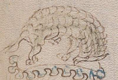 Voynich MS drawing of an armadillo