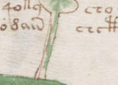 Voynich Manuscript drawing of a plant stem, folio 2v