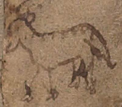 Voynich Manuscript drawing of an animal possibly used for parchment
